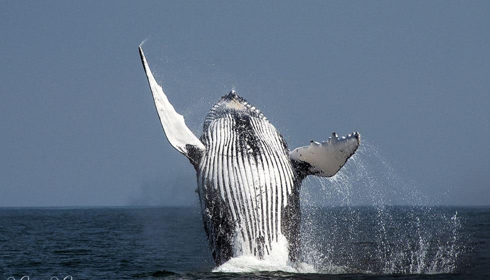 whale tours Knysna